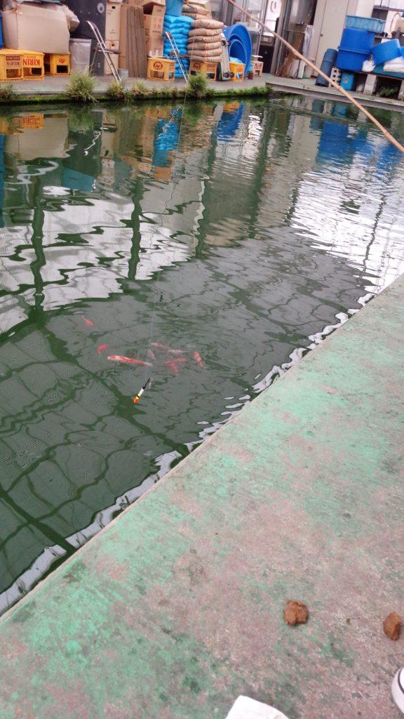 金魚を水面に集める