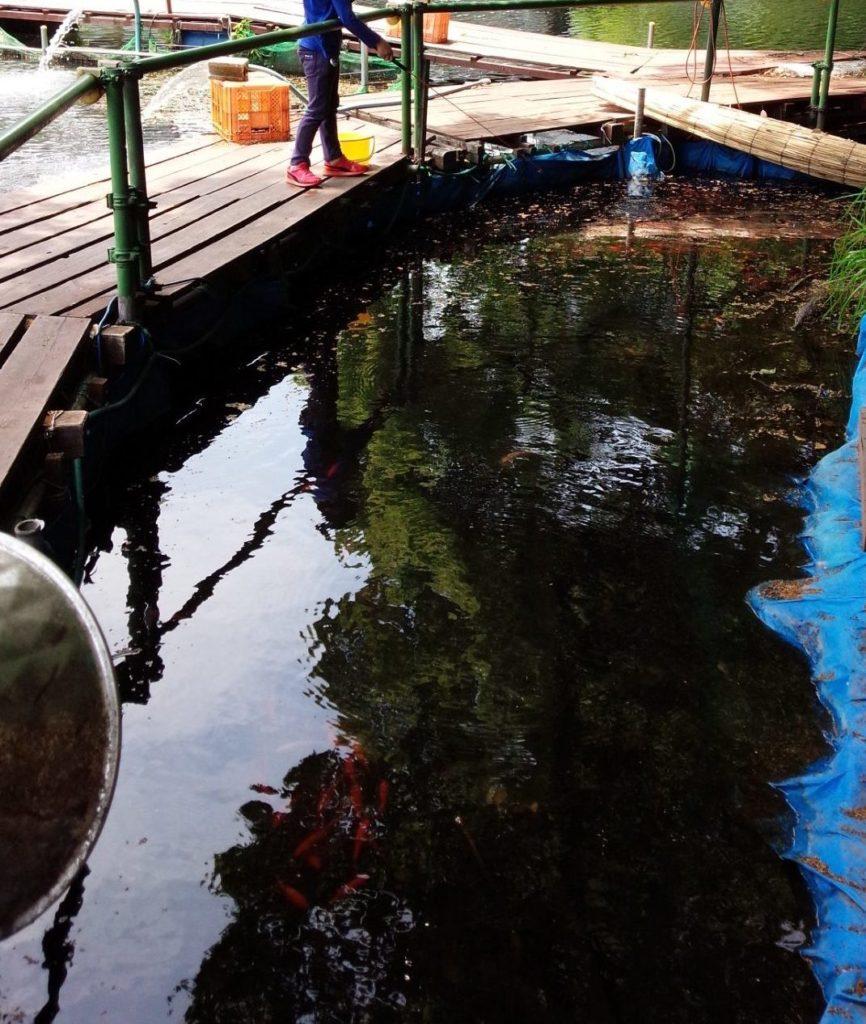 金魚釣り場