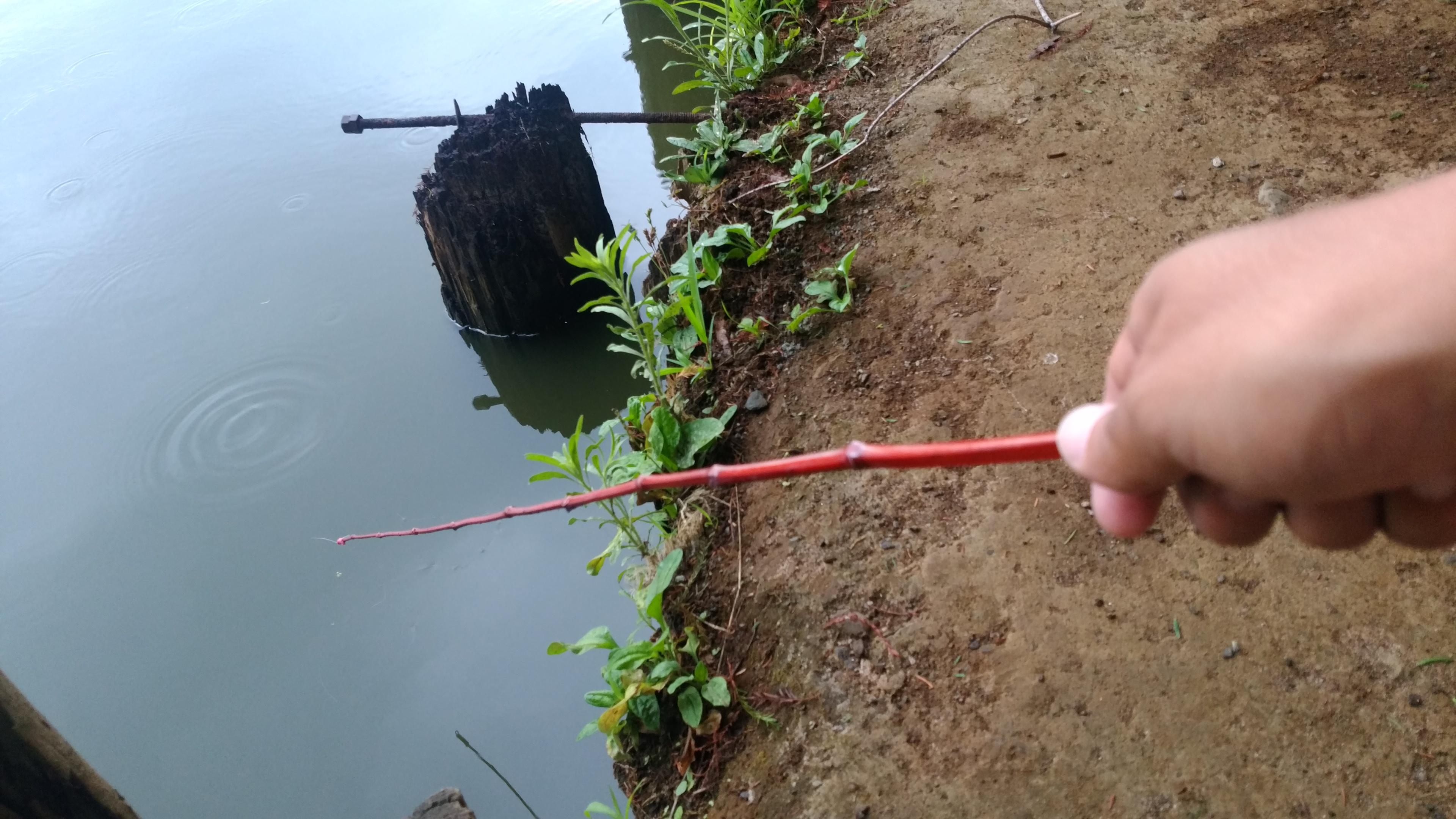 釣り 方 テナガエビ