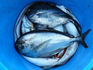 fish-422543__340