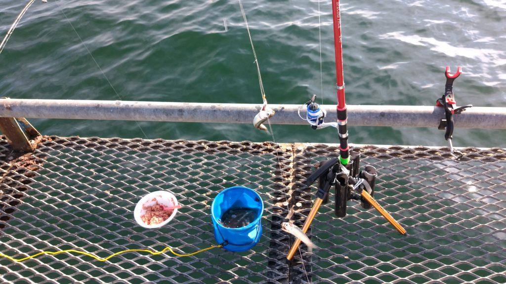 コマセエサと釣りバケツ