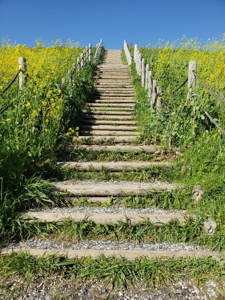 古墳を上る階段