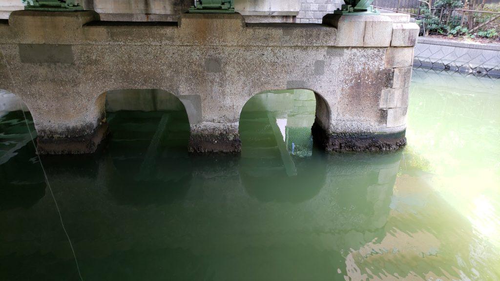 仙台堀川公園の橋の下の水深は約50cm
